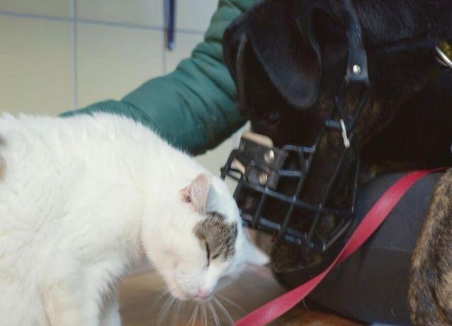 Pies Pinki i kot Miętka poznają się